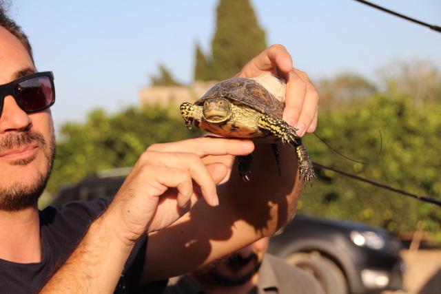 """Soltamos tortugas en """"els ullals de la Senillera"""""""